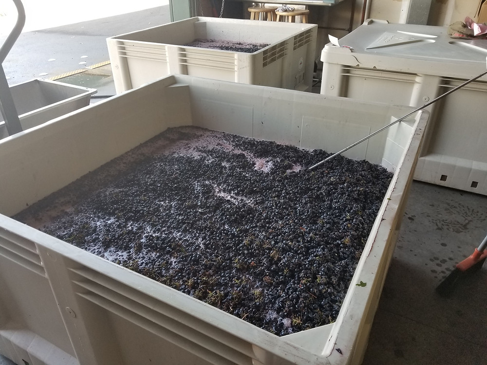 Petite Sirah all crushed up