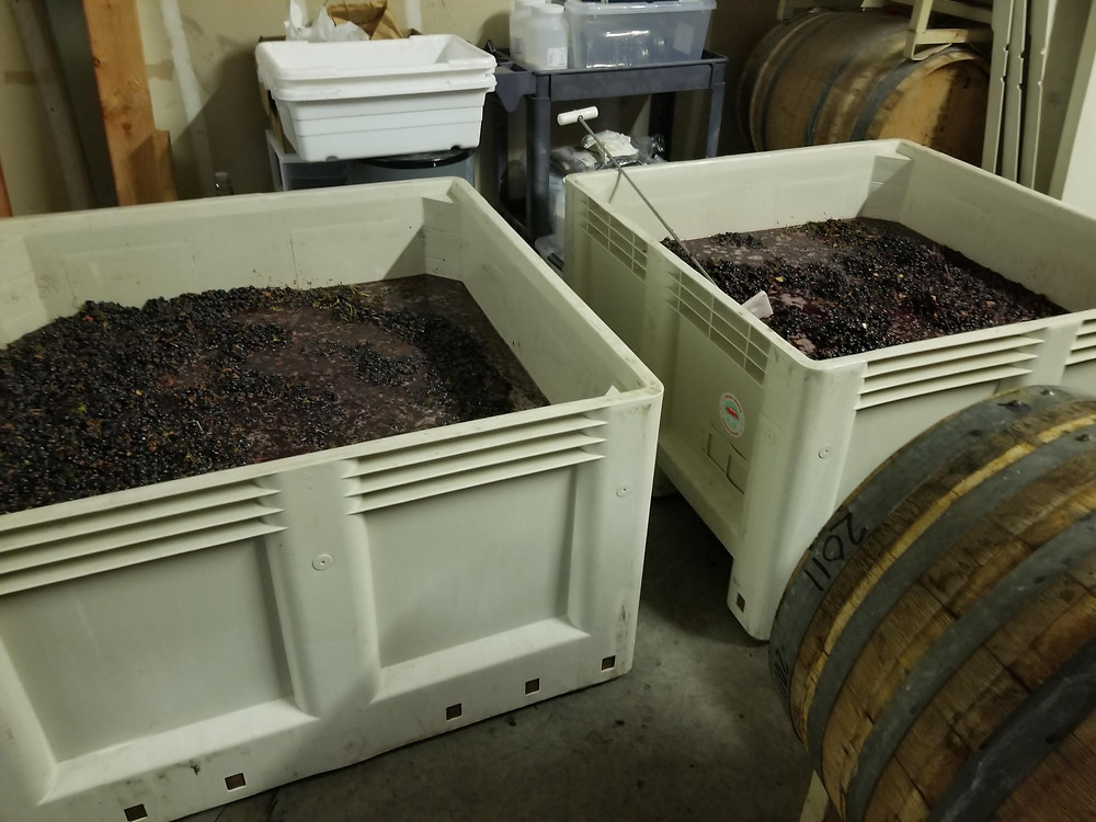 The Syrah after crushing