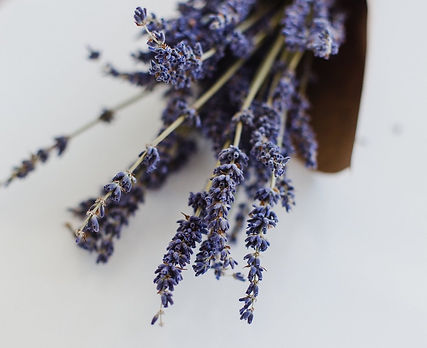 close-up-purple-blooms-of-lavender.jpeg