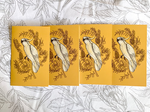 Greeting Card: Parrot 4 x $10