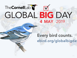 Global Big Day 2019