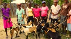 Goat program