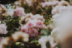 Canva - Pink Flowers (2).jpg