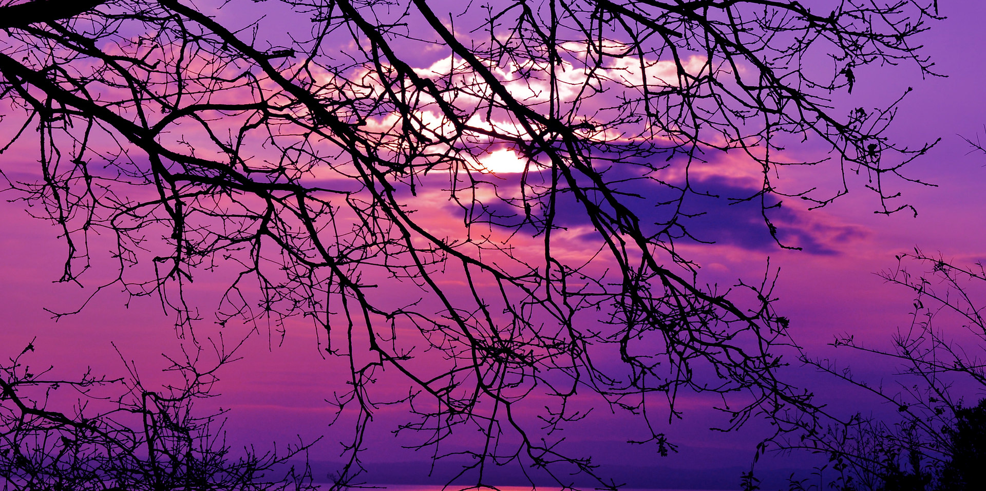 Artistic photo - Violet Sky at winter