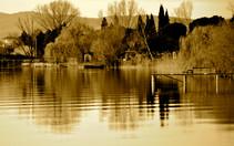 Natura - Paesaggio sul lago con alberi r