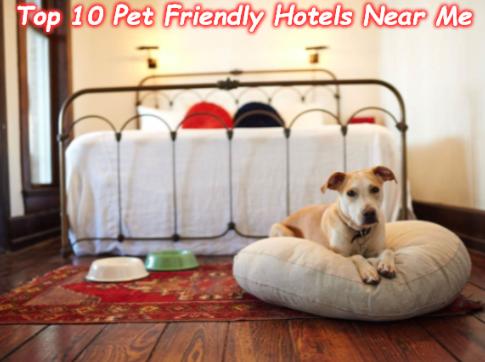Top 10 Pet Friendly Hotels Near Me