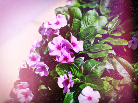 moreflowers.jpg