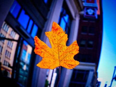 AzcaryPhotography_October19_Edits_2.jpg