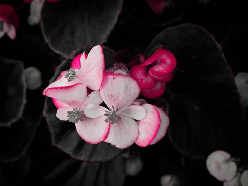 AzcaryPhotography_October19_Edits_21.jpg