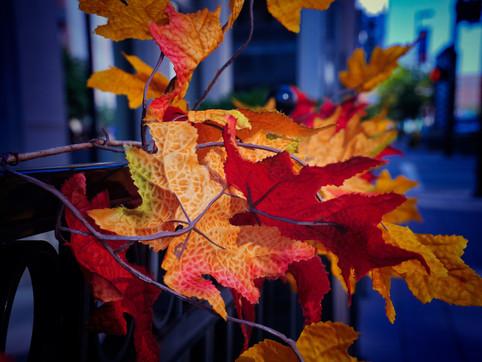 AzcaryPhotography_October19_Edits_1.jpg