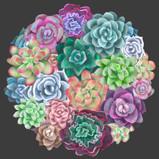 """Circle of Succulents"""