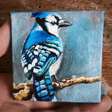 """""""Blue Jay"""""""