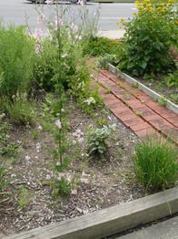 Our Garden July  2013 014.JPG
