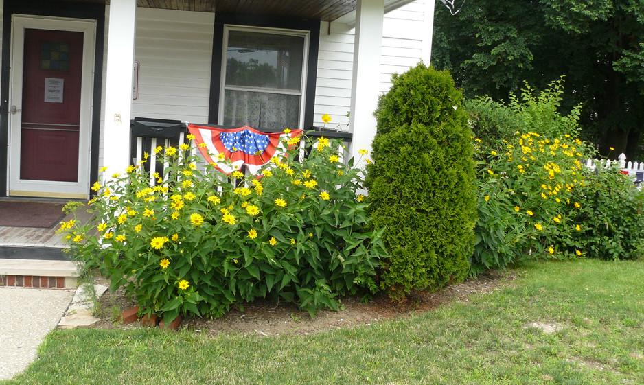 Our Garden July  2013 010.JPG