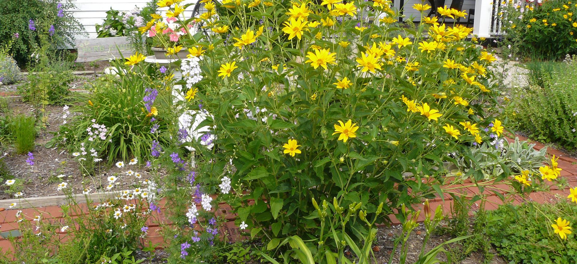 Our Garden July  2013 007.JPG