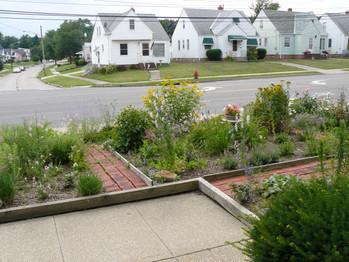 Our Garden July  2013 018.JPG