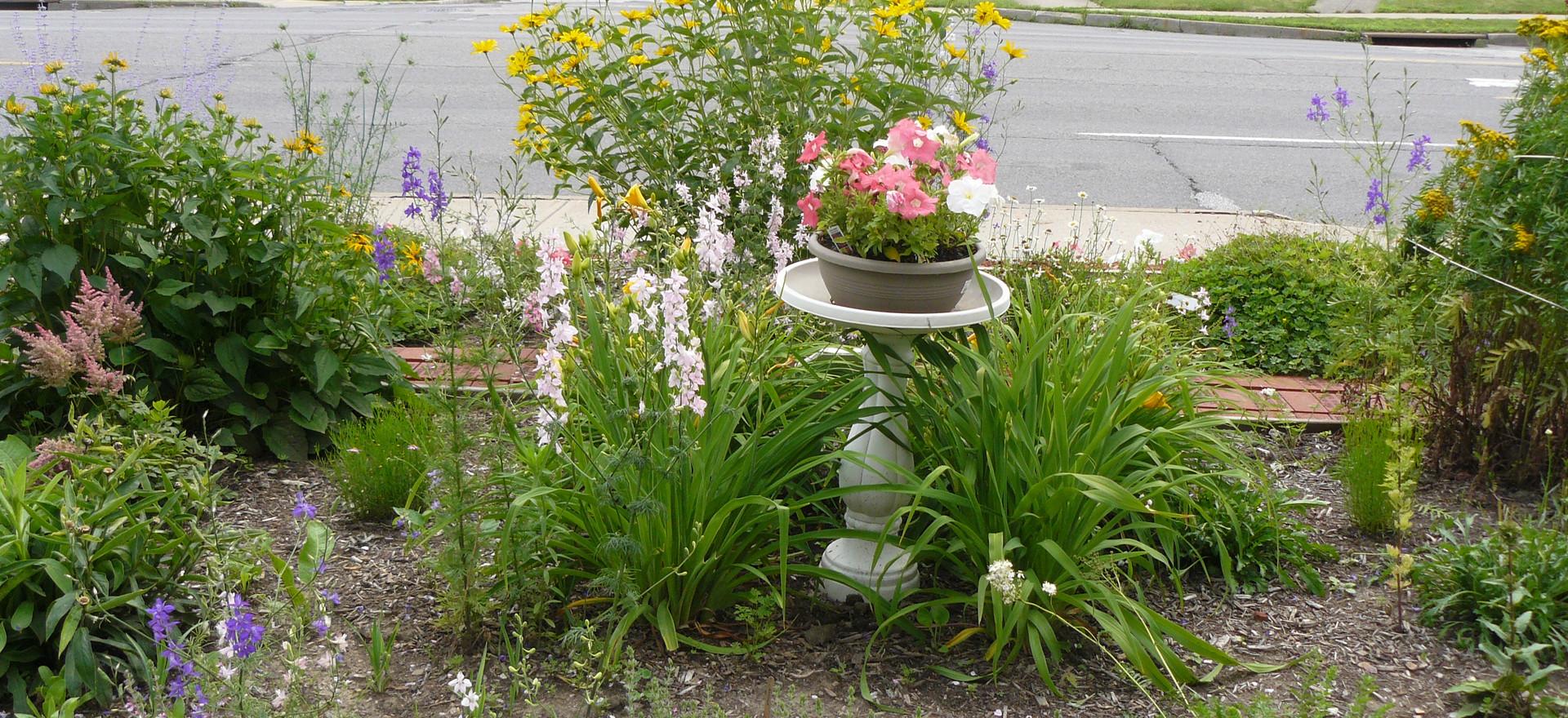 Our Garden July  2013 017.JPG