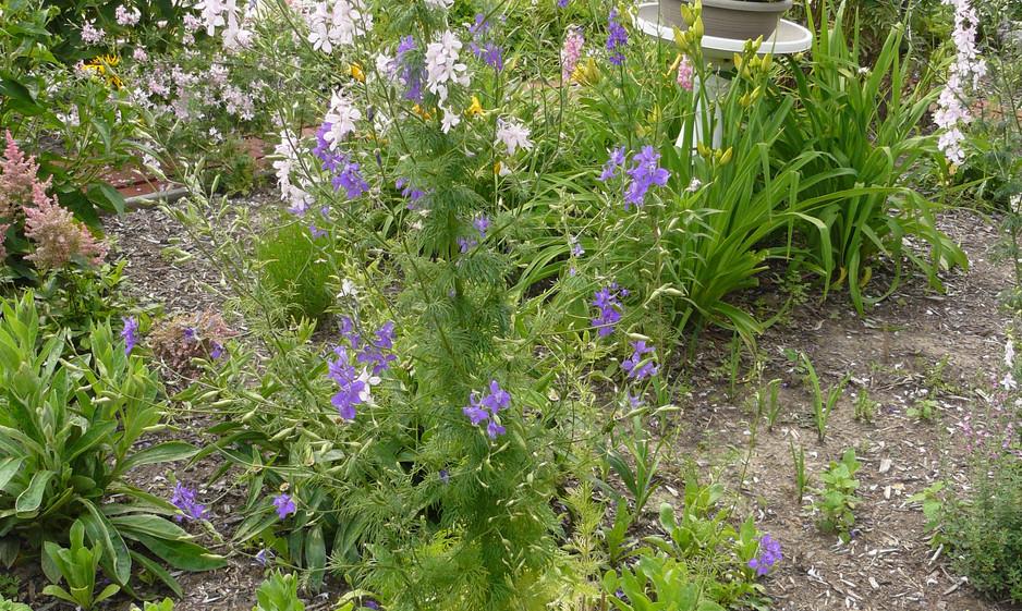 Our Garden July  2013 015.JPG