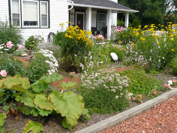 Our Garden July  2013 005.JPG