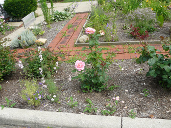 Our Garden July  2013 004.JPG