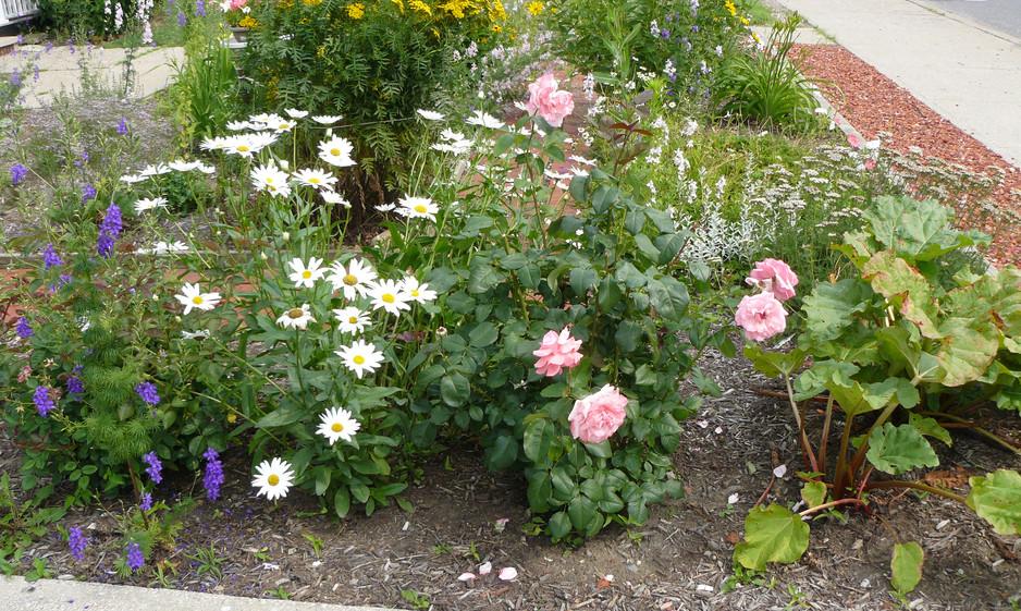 Our Garden July  2013 003.JPG