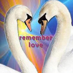 Pj Fay Remember Love Swans