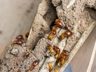 Is a building and pest inspection always necessary?