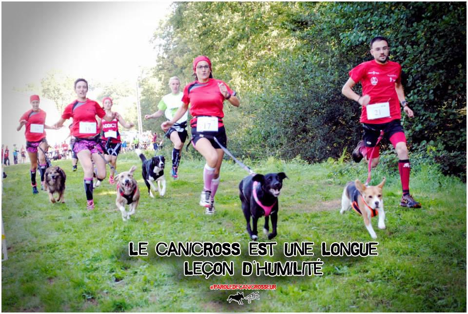 chien, passion, canicross, course à pied