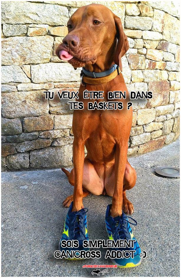 canicross run chien