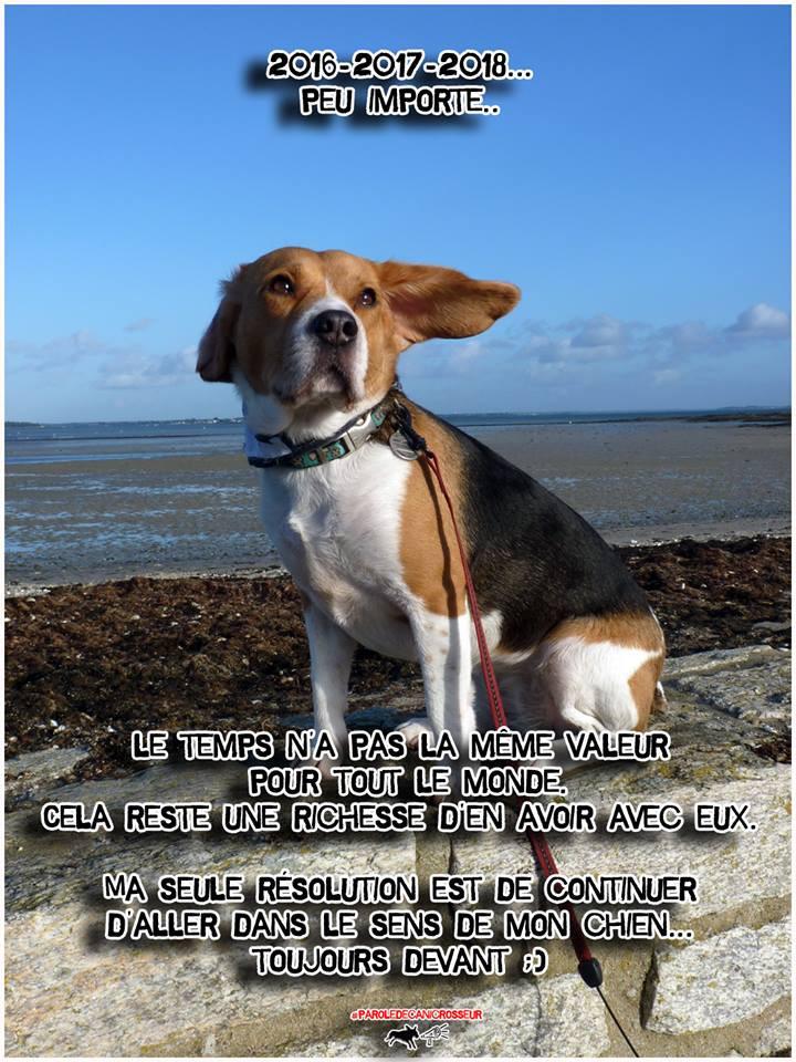 chien, canicross, beagle, run