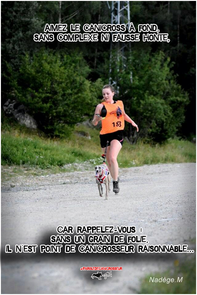 folie canicross chien