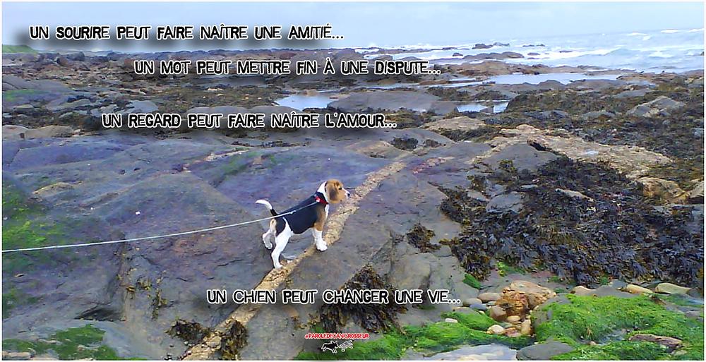 chien amour, beagle