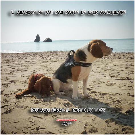 L'abandon=Mot inconnu chez nos chiens