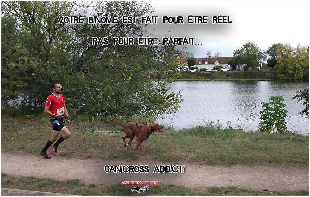 canicross, courir avec son chien