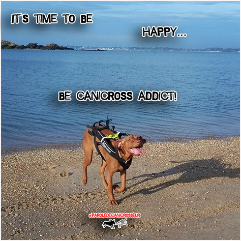 Il est où le bonheur...