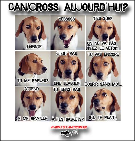 La réaction de ton chien!! :)