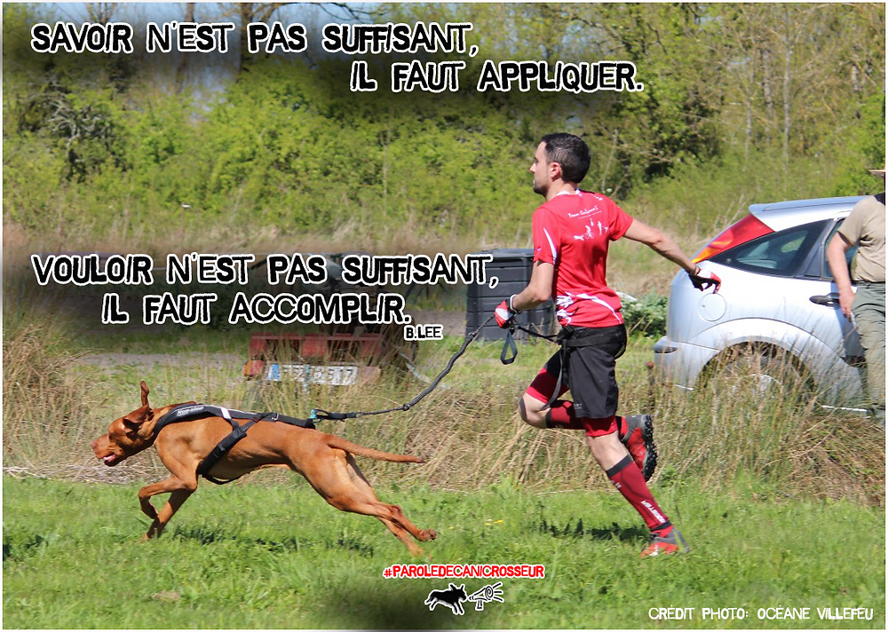 canicross addict run dog chien courir