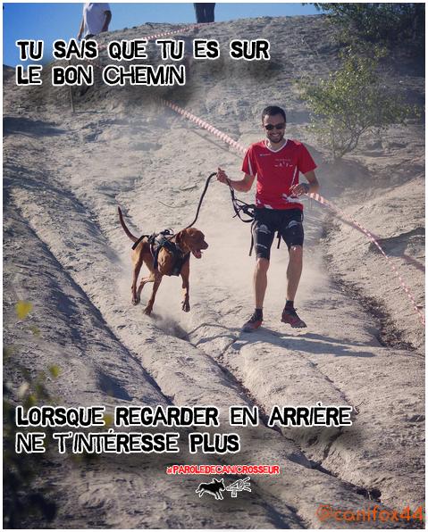 Canicross Blog Addict dog