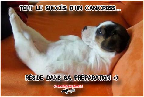 Cani préparation ? :D