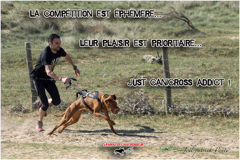 passion chien canicross