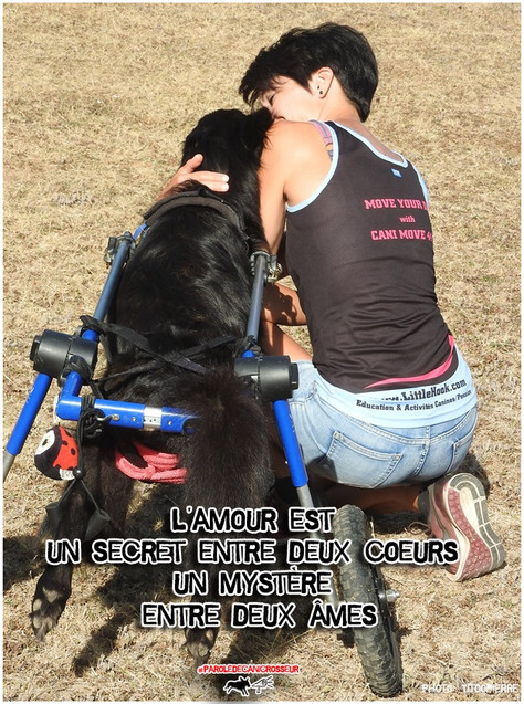 Être un binôme ne se résume pas à s'attacher à son chien...