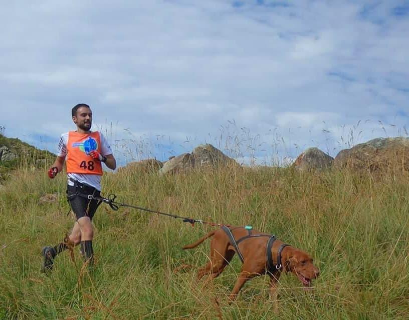 chien, runner, running, alpes