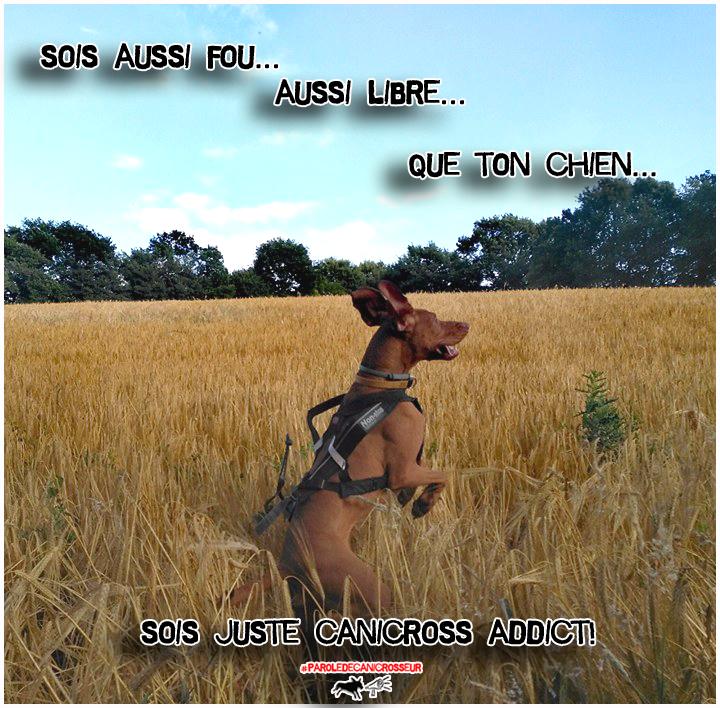 canicross run dog fun