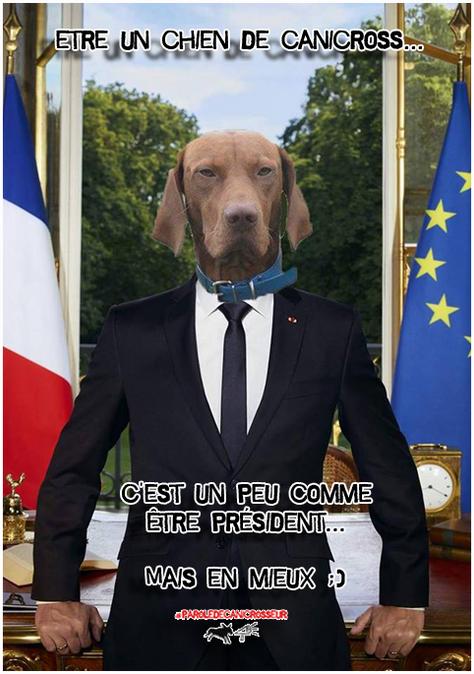 Chien de Canicross ou président?