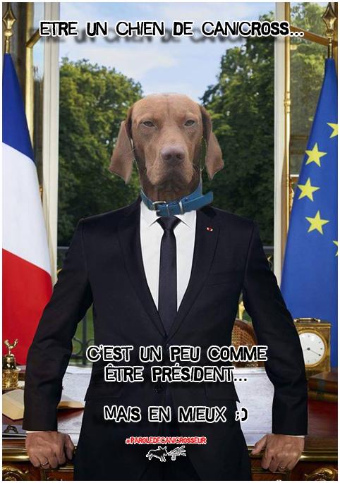 canicross chien président