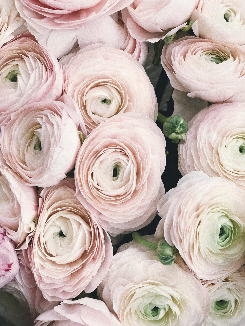 Canva - Close-up Photography of Pink Pet