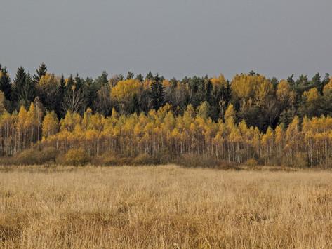 Golden fall in Naliboki Forest