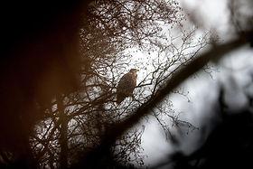 watching lynx  - wildlife holidays - wildlife tours to Naliboki Forest