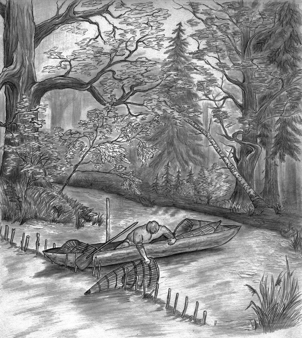 Medieval peasants are catching mud loaches (locally called as wiun) in Pawnochnaye Wiunishcha swamp, the central north of Naliboki Forest with such a special catching equipment done from willow twigs; 17th or 18th century. Drawing by Anna Sidorovich.