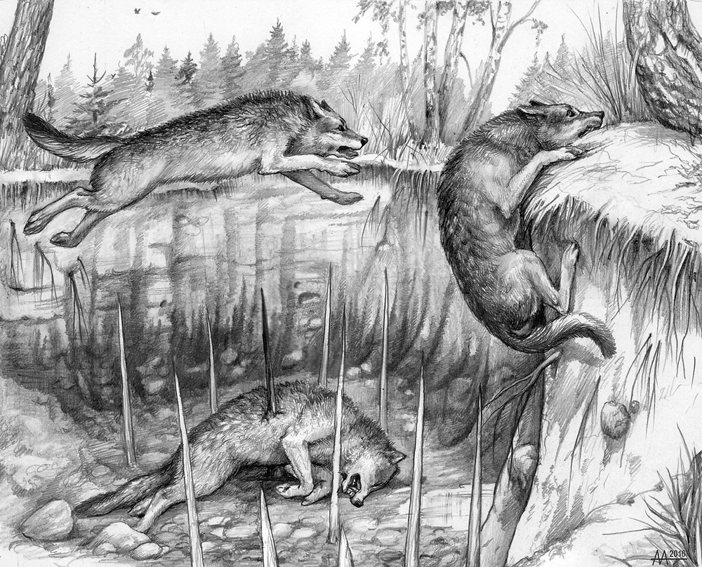 Wolves in pitfall with sharp peaks. Drawing by Aliaksandr Mitianin.
